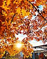 The colorful Saarlandisch autumn.jpg
