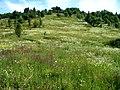 The hare's ravine - panoramio.jpg