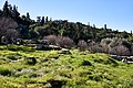 The ruins of the Ancient Agora and in the background the Areopagus.jpg