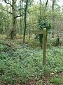 This way to Turmer through the woods - geograph.org.uk - 268208.jpg