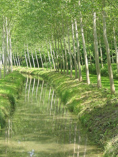 Thorigny-sur-Oreuse: canal dans le parc de l'ancien château.