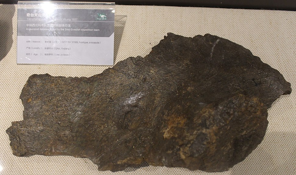 Tienshanosaurus-Paleozoological Museum of China