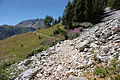 Tignes - trail 7.jpg