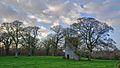 Tower ^ Trees - panoramio.jpg