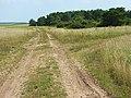Track, Larkhill Artillery Range - geograph.org.uk - 524918.jpg