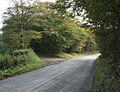Track to Stibb Hollow Farm - geograph.org.uk - 571787.jpg