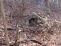 Trail 2 PB250219.jpg