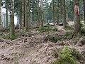 Trail from Sonnenberg to Rehberger Planweg 05.jpg