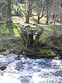 Tree-seat, by the River Erme - geograph.org.uk - 1802252.jpg