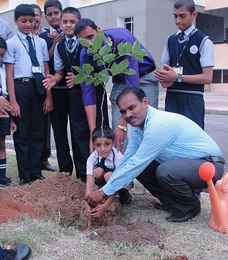 Tree planting - Tree planting by a boy in India