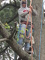 Tree trim by Chad Tree Experts.JPG