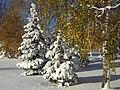 Trees Tuira Oulu 20061029.JPG