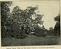 Trees and shrubs of Prospect park (1906) (14803568313).jpg