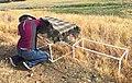 Tricolored blackbird trap (36579940243).jpg
