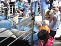 Tring Spring Fayre in Church Square 2009, Children feeding kids and lambs - geograph.org.uk - 1283264.jpg