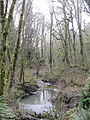 Tryon Creek State Natural Area, Oregon 2012.JPG