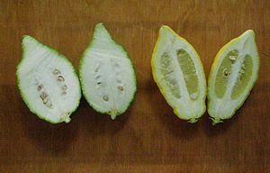Yemenite citron - Image: Two citrons