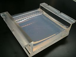 Two percent Agarose Gel in Borate Buffer cast in a Gel Tray (Front, angled)