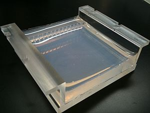 Molecular biology - Two percent Agarose Gel in Borate Buffer cast in a Gel Tray (Front, angled)