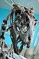 Tyrannosaurus Rex (106401102).jpg