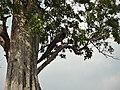 Uda Walawe National Park 2017-10-26 (1).jpg