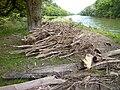 Ulm - Treibholz durch Hochwasser an der Illermündung.jpg