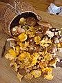 Un tas de champignons2.JPG