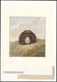 Ursus longirostris - 1819 - Print - Iconographia Zoologica - Special Collections University of Amsterdam - UBA01 IZA1000134.tif