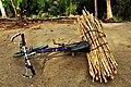 Vélo chargé du fagot de bois à Grand Popo au Bénin.jpg