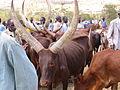 Vaches et marchands au marché de Mbare.JPG