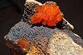 Vanadinite, sidérite 90.3.9797.jpg
