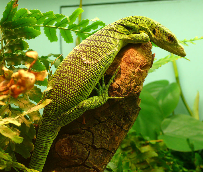 Emerald Tree Monitor