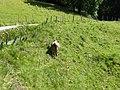 Viehgangeln am Grünten (4).jpg