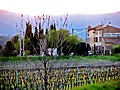 Vignoble à Villemagne.jpg