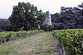 Vignoble du Château de Tracy-20120730.jpg