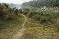 Village Track - Riverbank Churni - Halalpur Krishnapur - Nadia 2016-01-17 8791.JPG