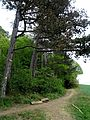 Vorholzer Bergland (1).JPG