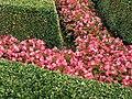 Vrtbovská zahrada, buxus a zalky.JPG