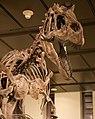WLA hmns Allosaurus 2.jpg