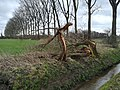 Wageningen after the storm of 18 Januari 2018 - 9.jpg