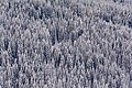 Wagrain Winterwald 20180204 02.jpg