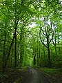 Waldweg bei Vaihingen - geo.hlipp.de - 10356.jpg