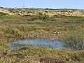 Wangerooge Biotop.jpg