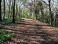 Wayfarer's Walk near Hambledon - geograph.org.uk - 1268291.jpg