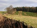 Weather Hill Wood, above Brancepeth - geograph.org.uk - 124420.jpg