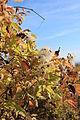 Weingarten im Herbst 5618.JPG