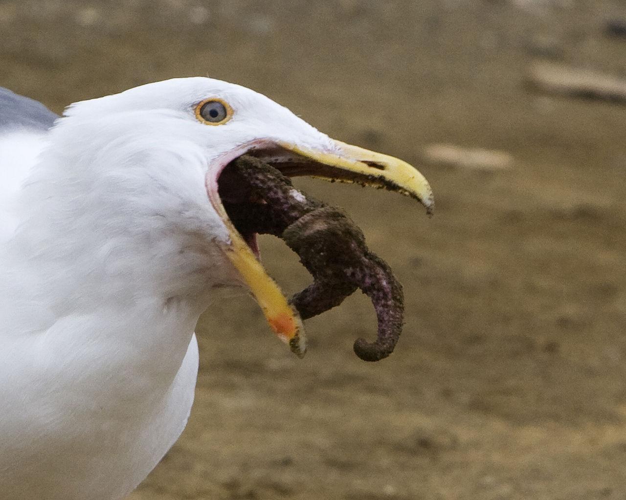 Boy Eating The Birds Food