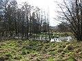 Wet ground beside footpath - geograph.org.uk - 1190887.jpg