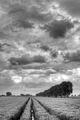 Wheat Field - San Giovanni in Persiceto (BO) Italy - May 16, 2013 - panoramio.jpg