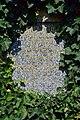 Wiener Zentralfriedhof - Gruppe 42 A - Alfons Czibulka - 3.jpg